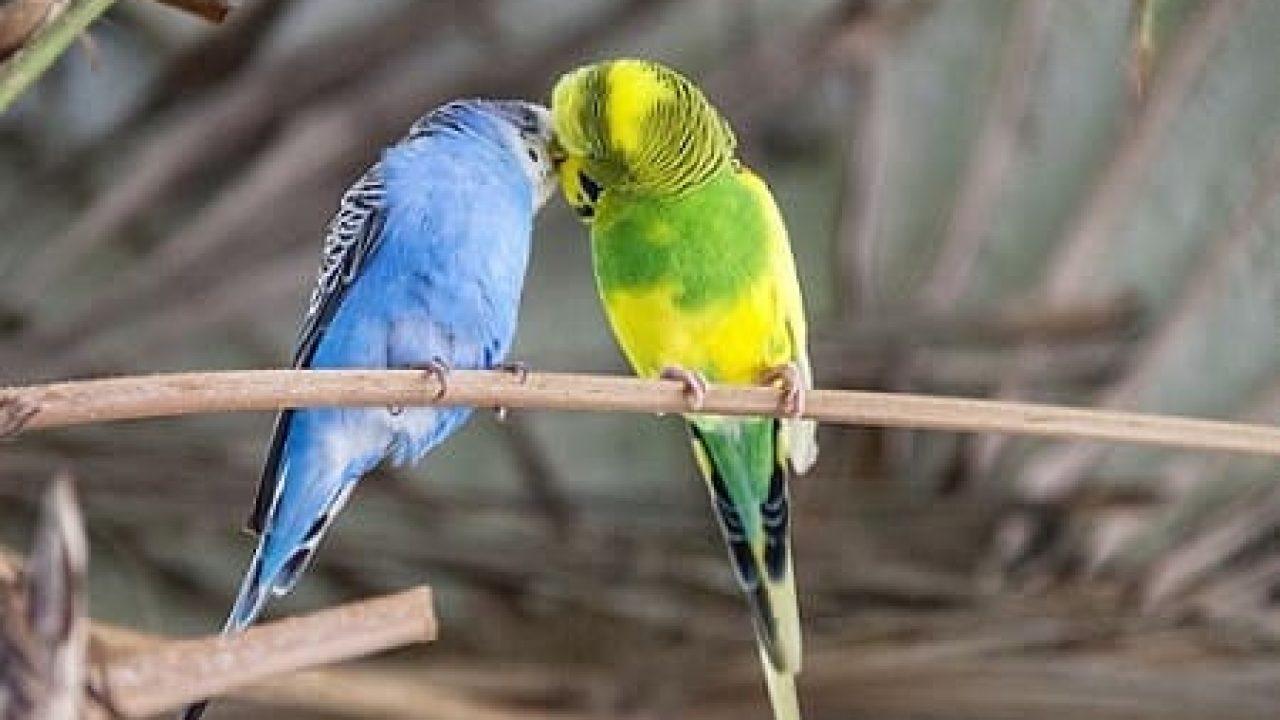 اجمل الطيور في العالم 8