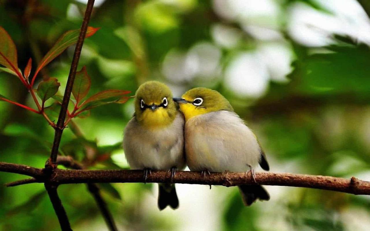 اجمل الطيور في العالم 9