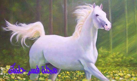 حصان ابيض 10