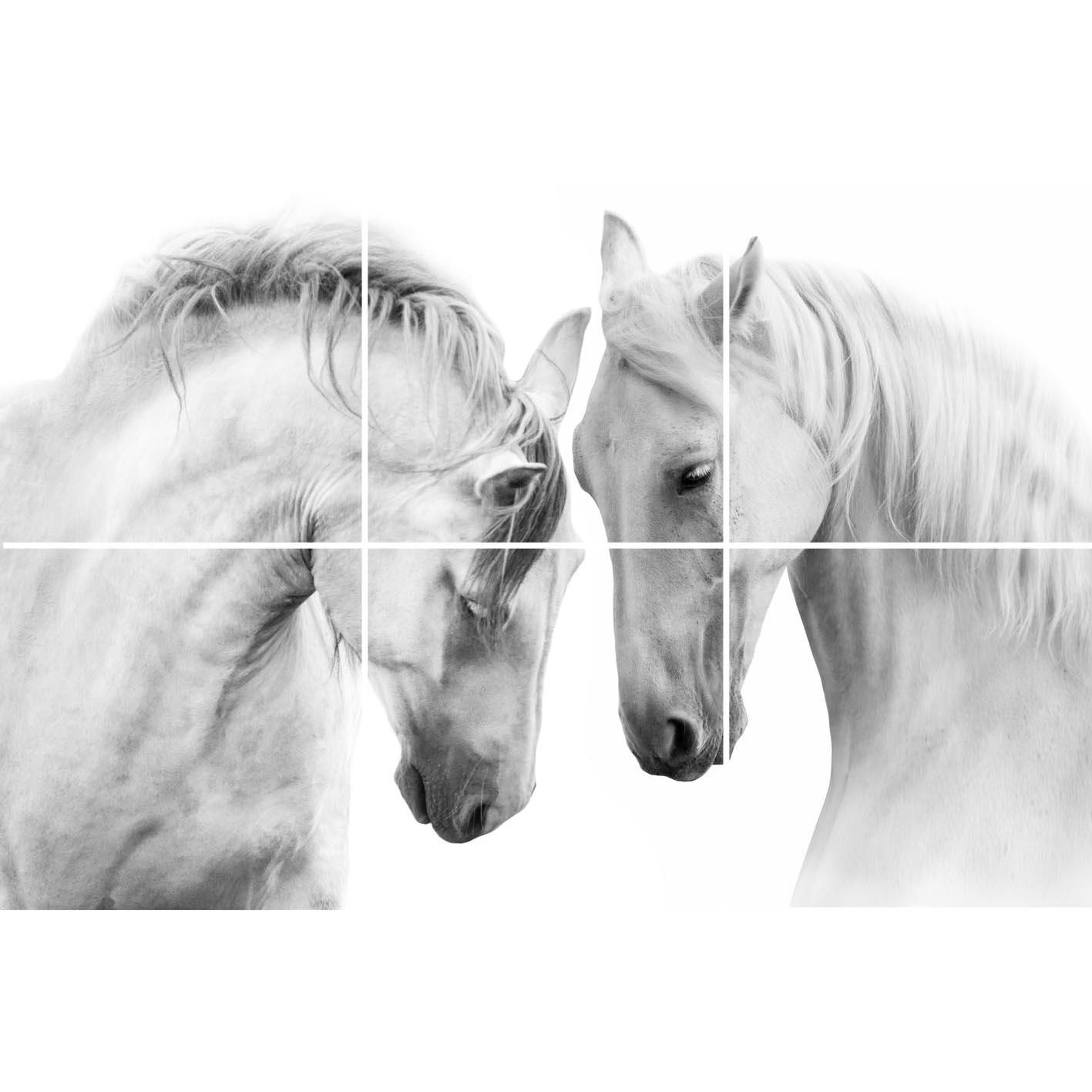 حصان ابيض 16