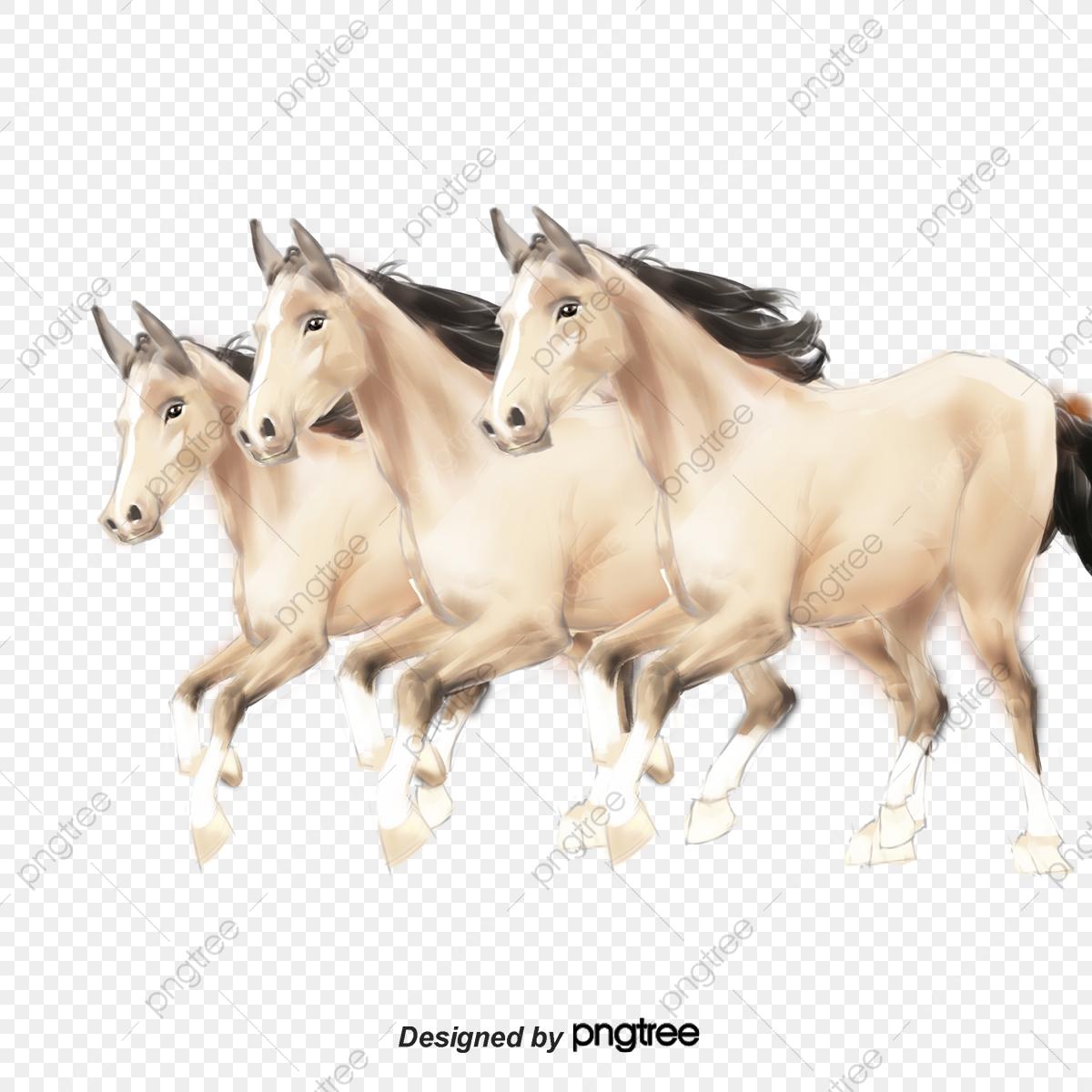 حصان ابيض 21