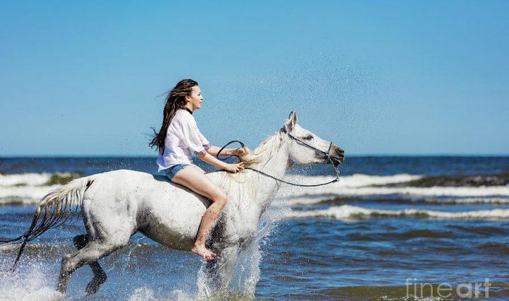 حصان ابيض 22