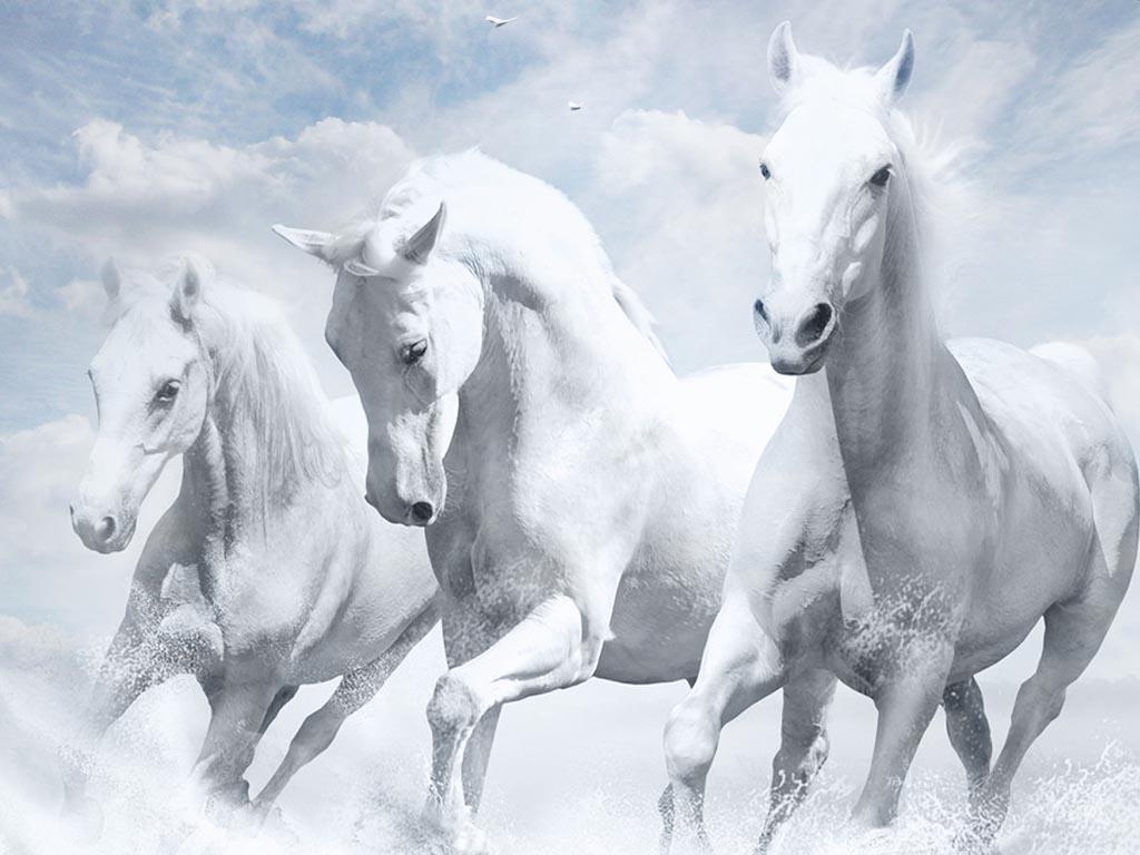 حصان ابيض 27