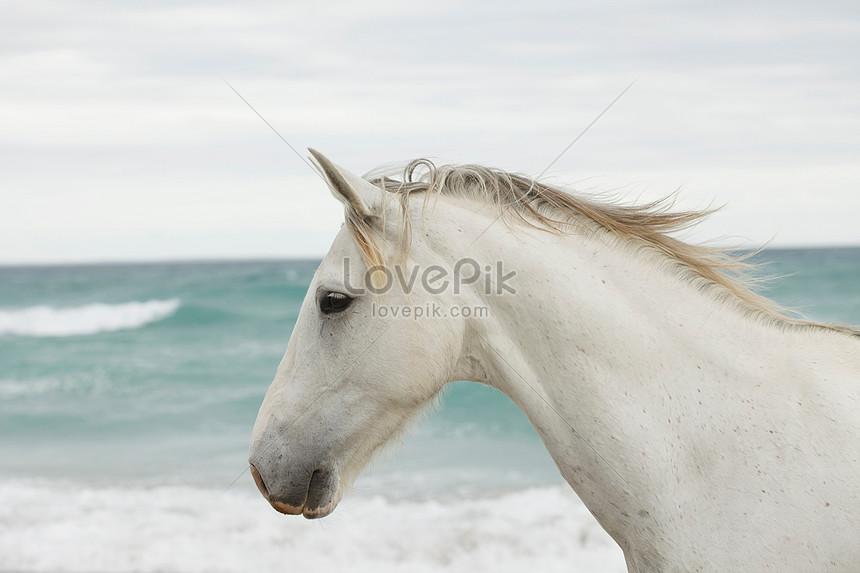 حصان ابيض 28