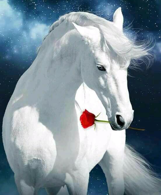 حصان ابيض 30