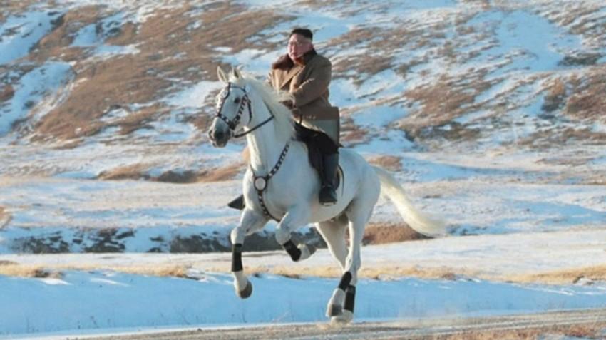 حصان ابيض 32