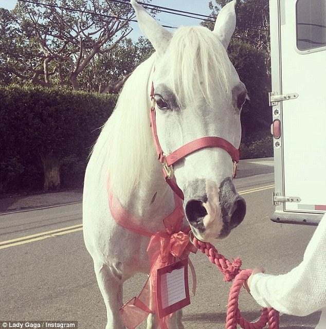 حصان ابيض 33