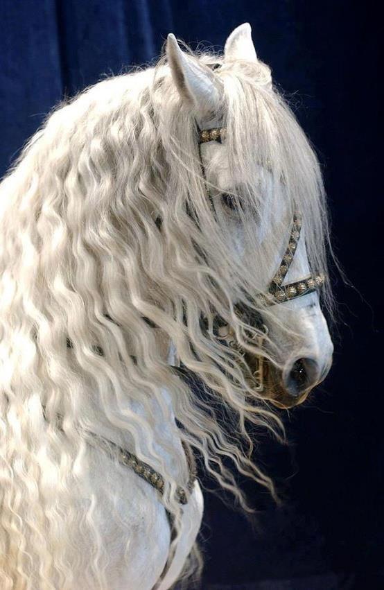 حصان ابيض 37