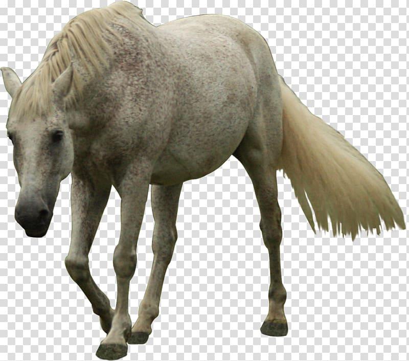 حصان ابيض 38