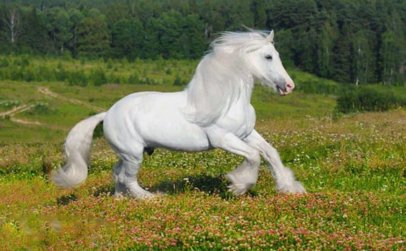 حصان ابيض 5