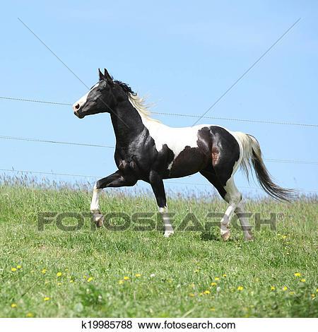 حصان ابيض 6
