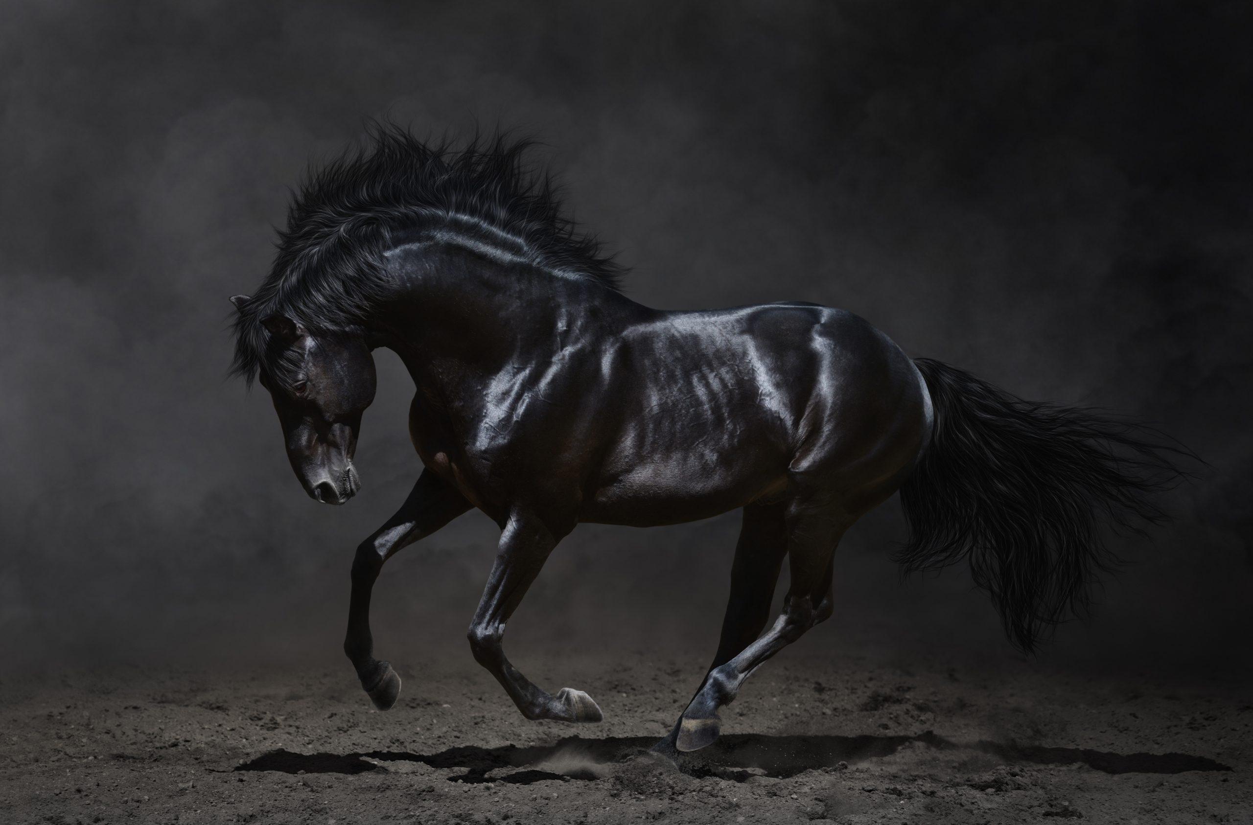 حصان اسود 22
