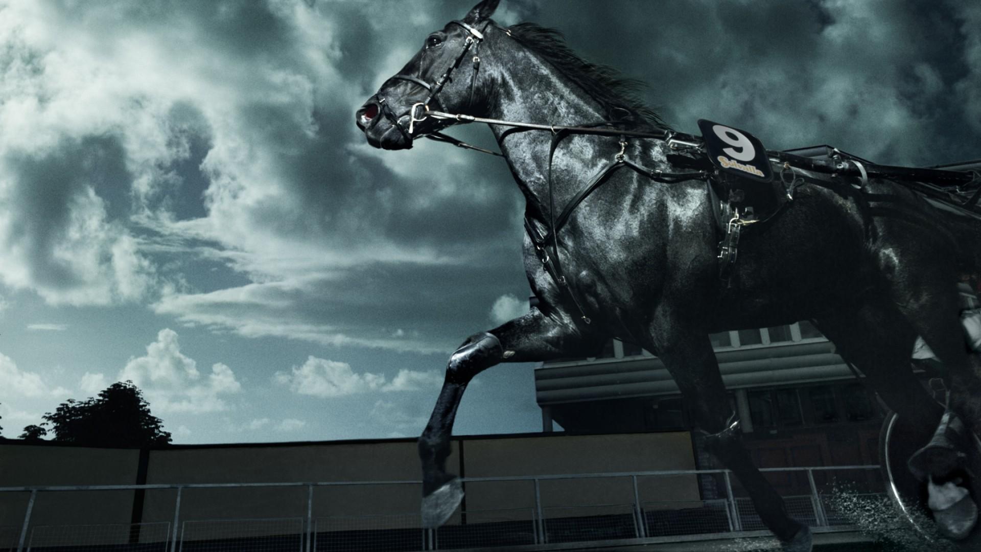 حصان اسود 32