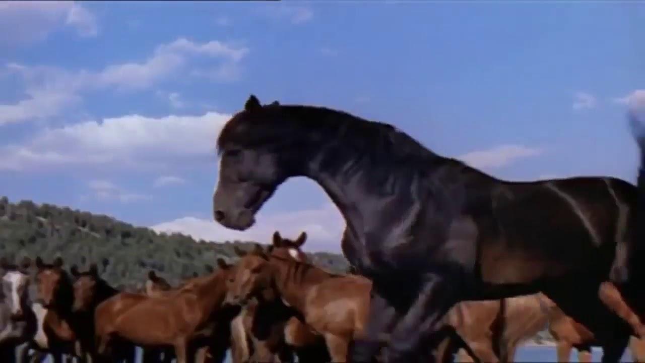 حصان اسود 47