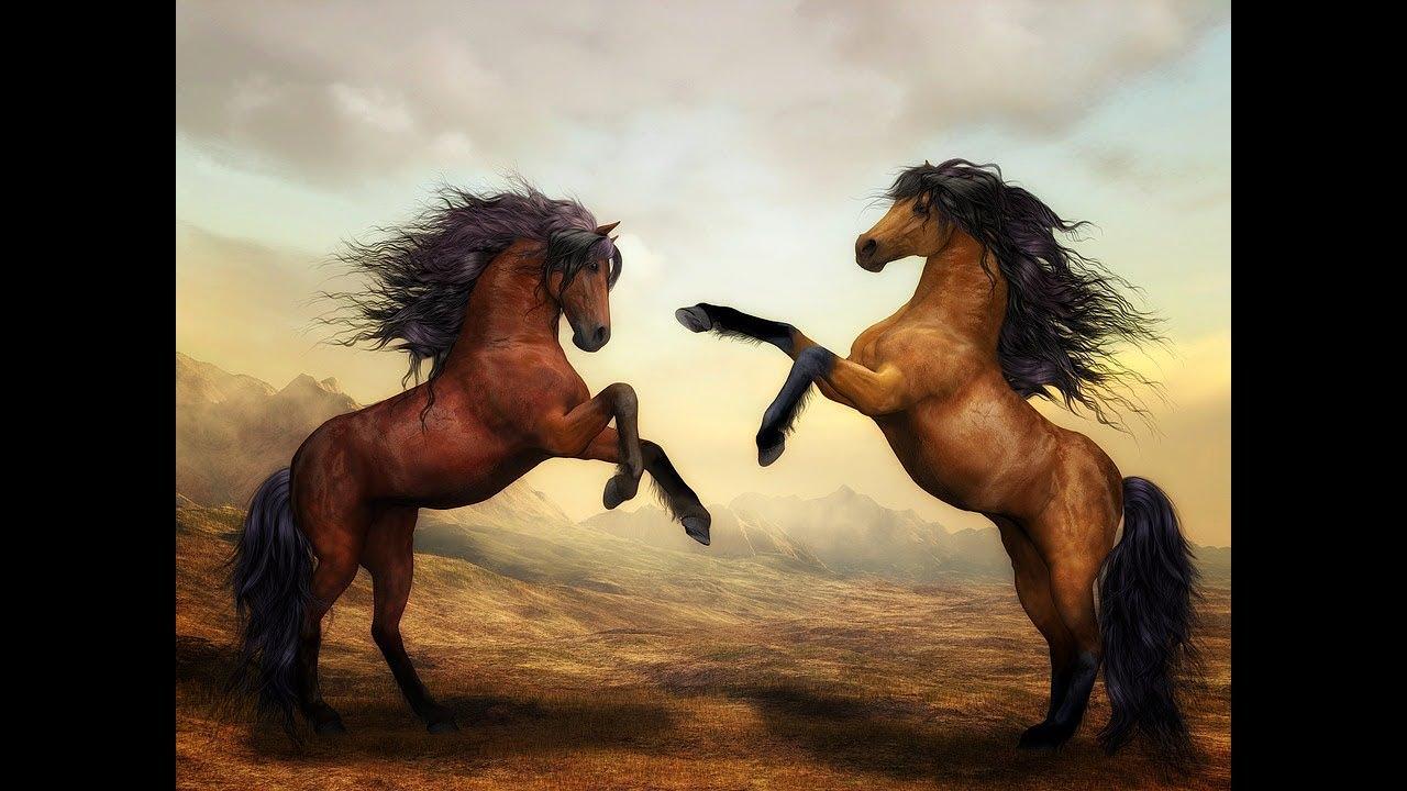 حصان اسود 50