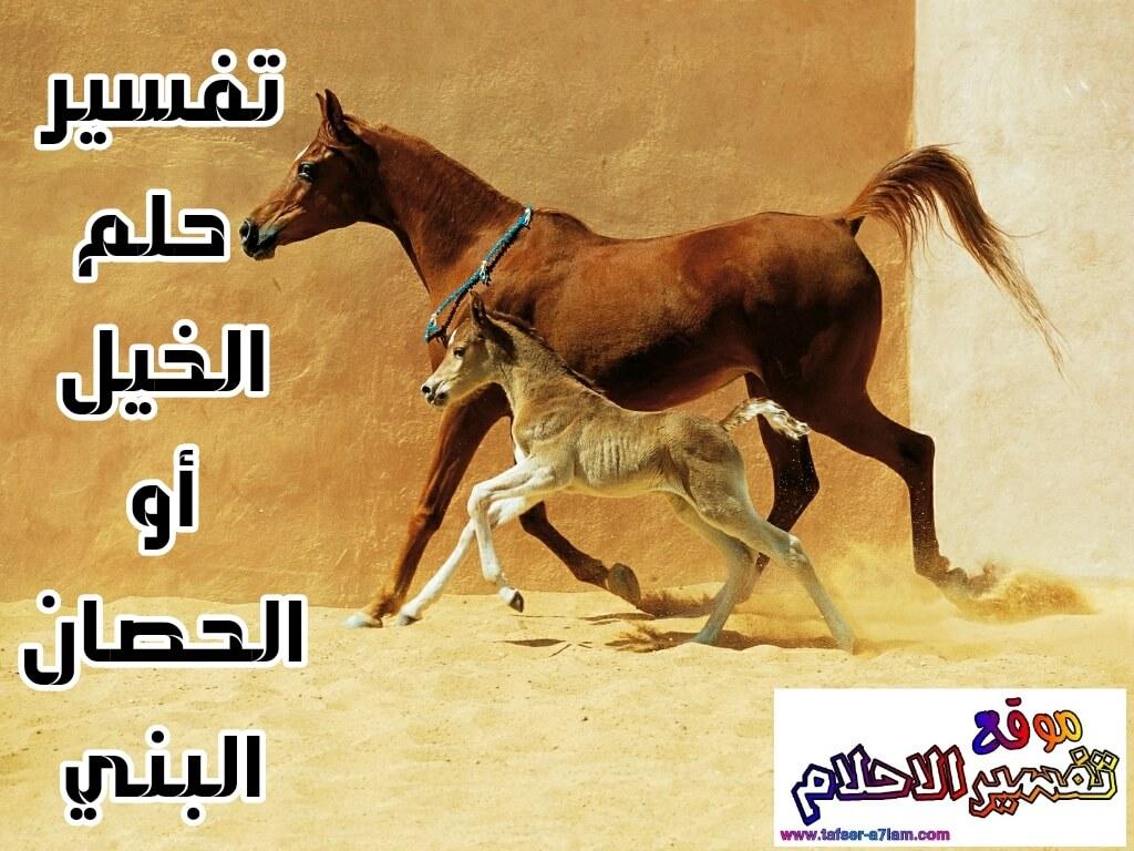 حصان اسود 61