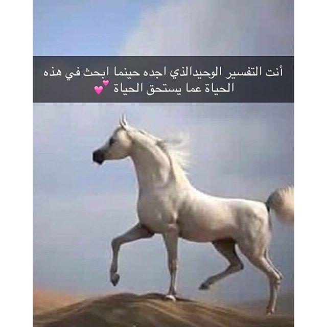 خيول عربية 13