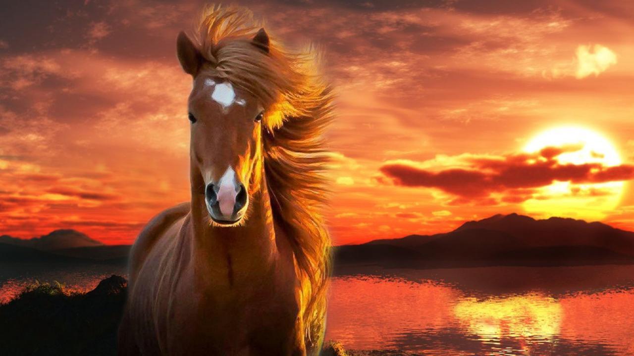 خيول عربية 21