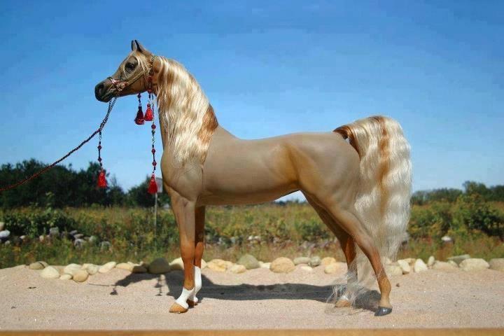 خيول عربية 4