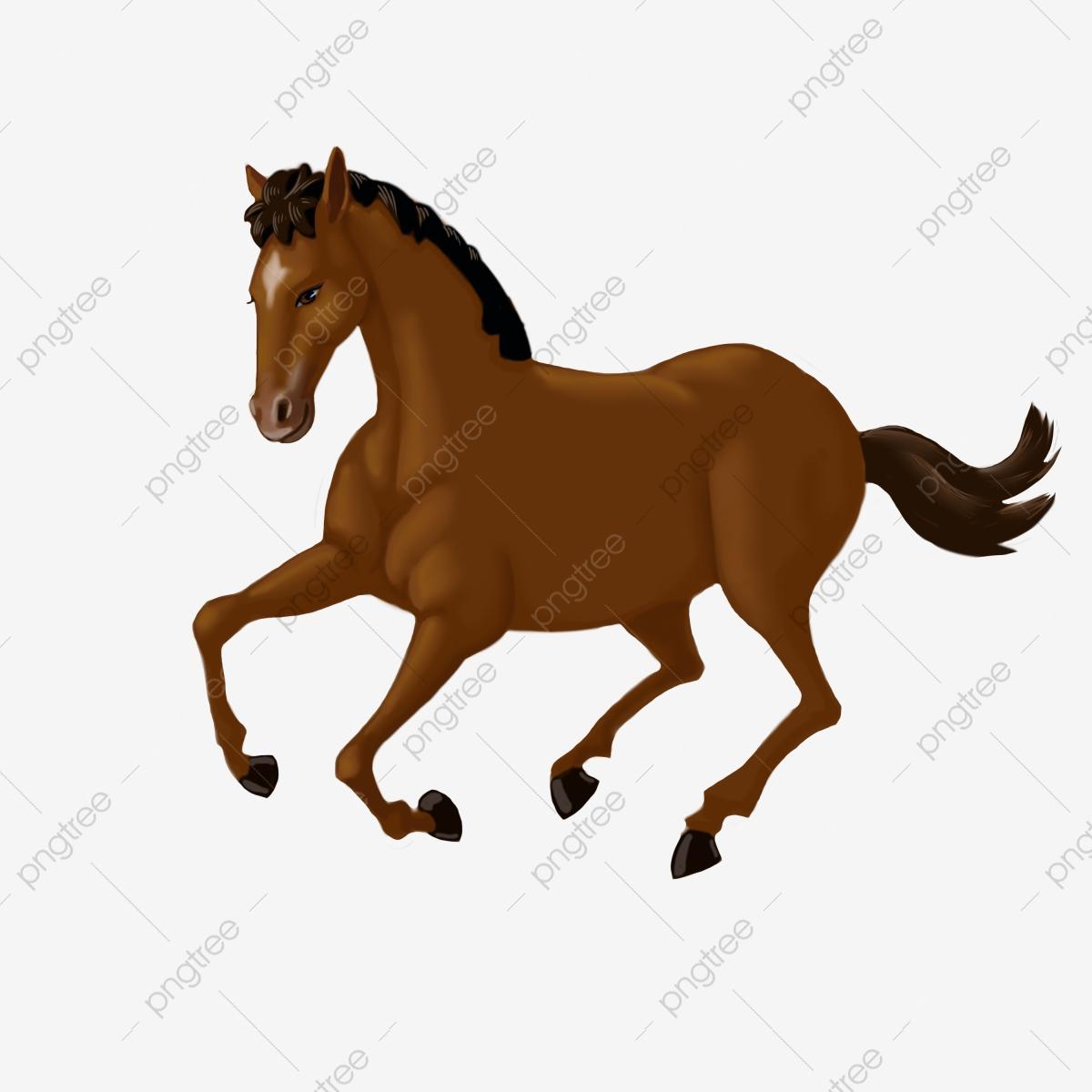 صور احصنة 1