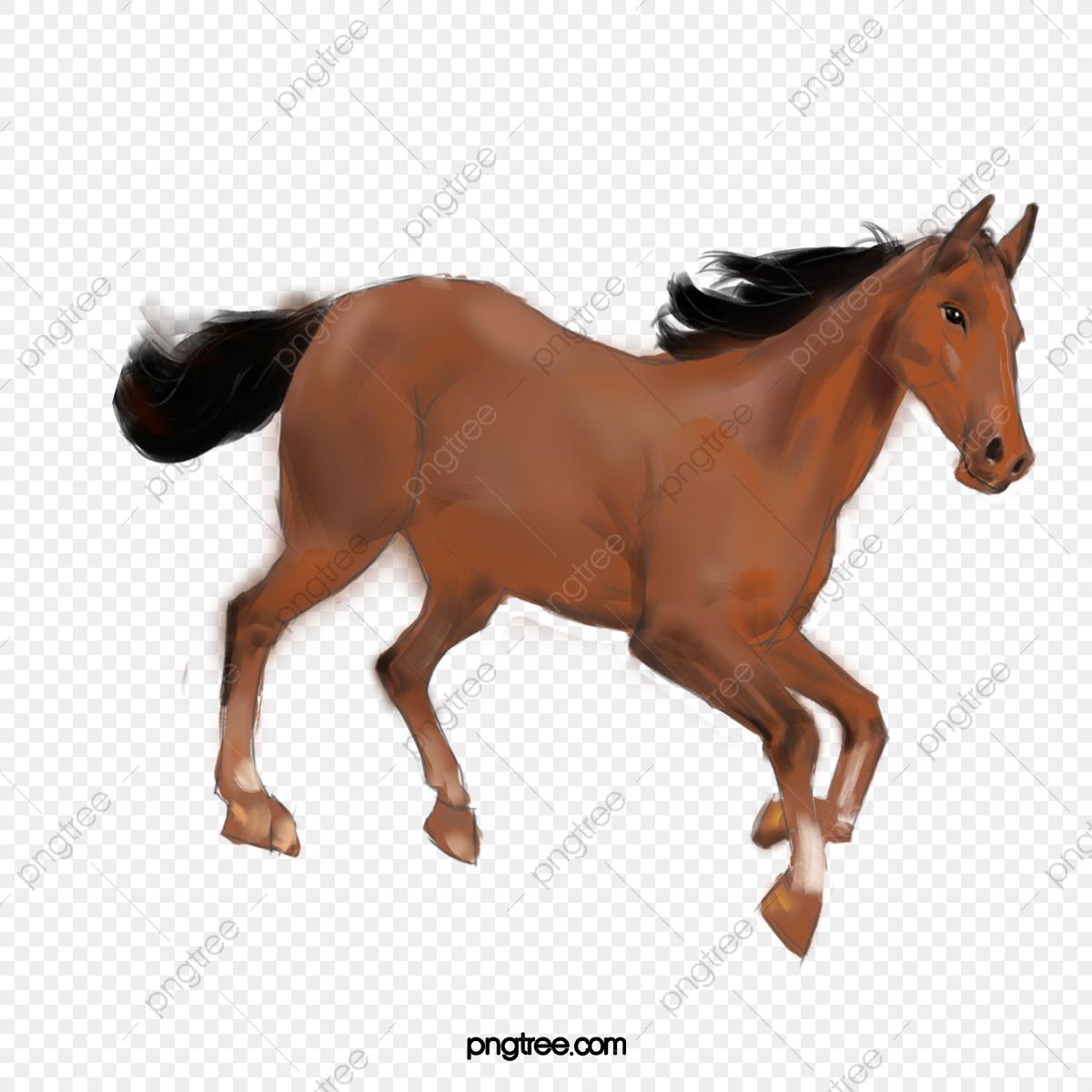 صور احصنة 2