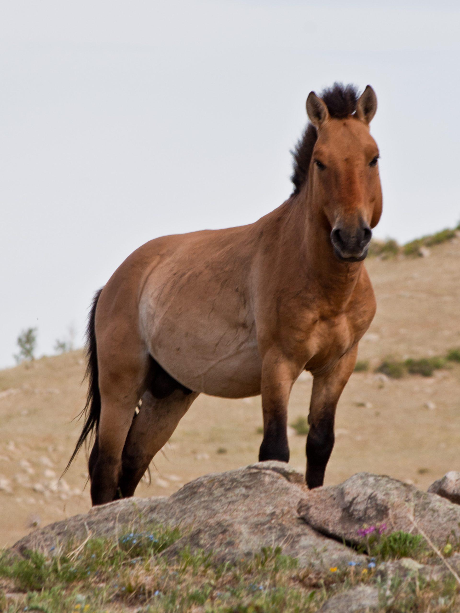 صور احصنة 3