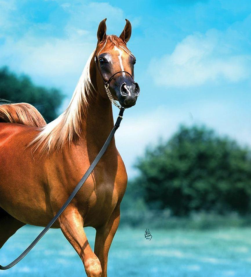 صور حصان 11