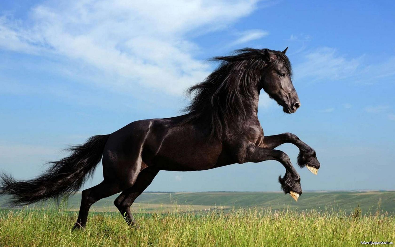 صور حصان 12