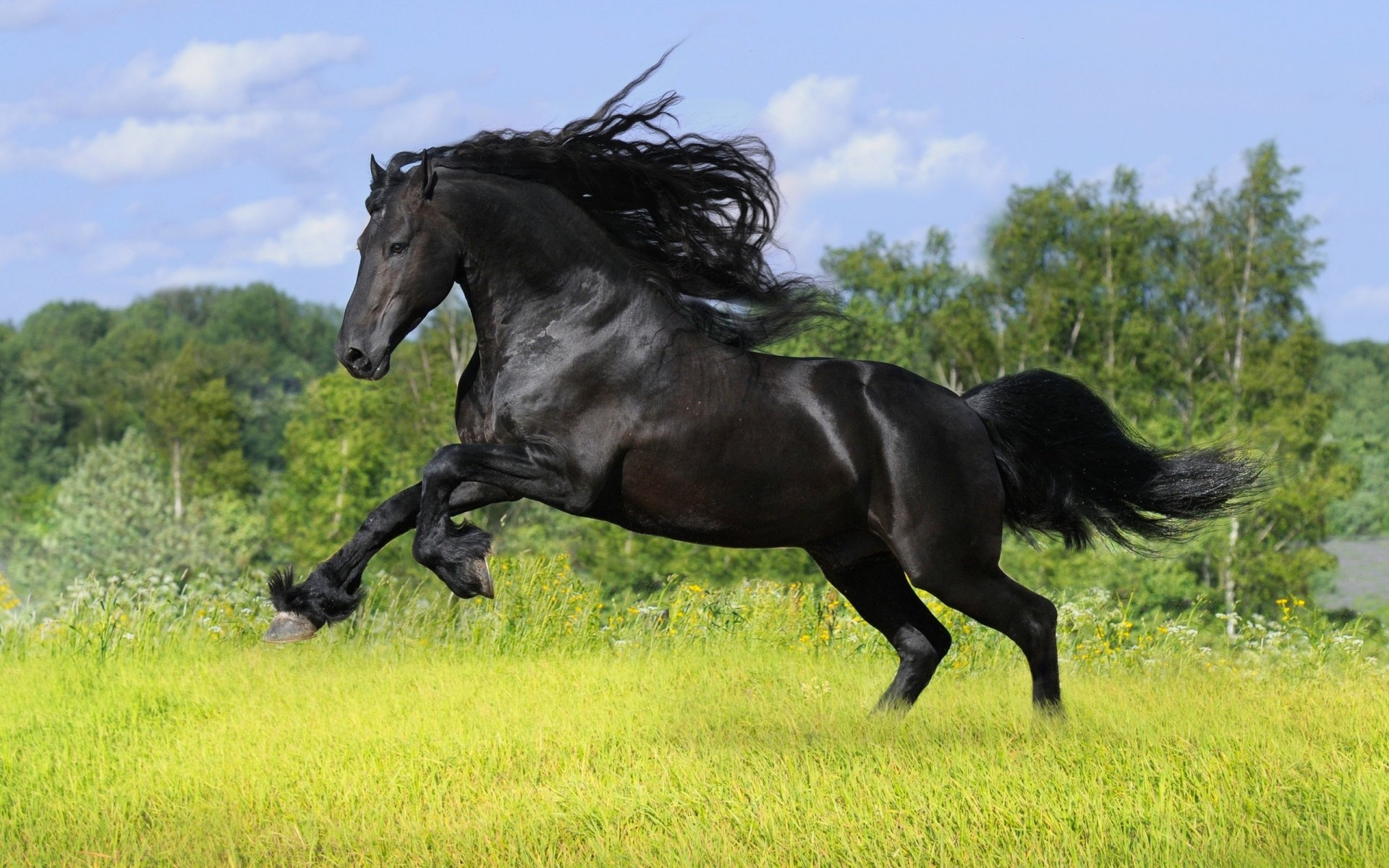 صور حصان 13