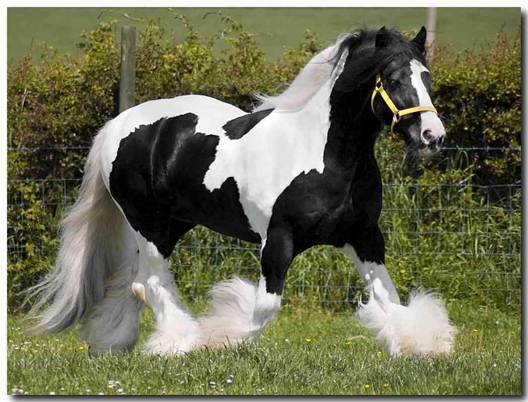 صور حصان 14