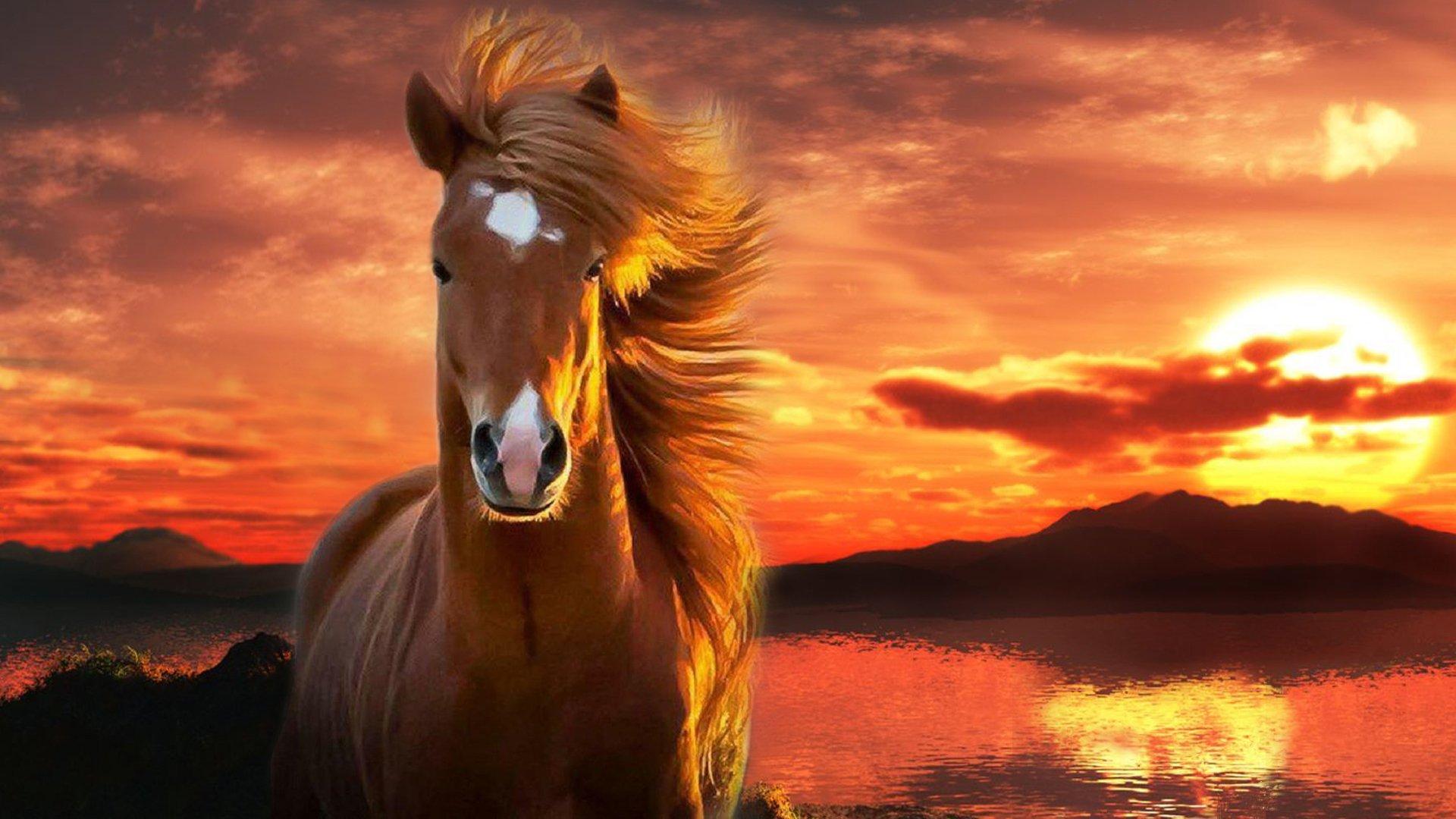 صور حصان 3
