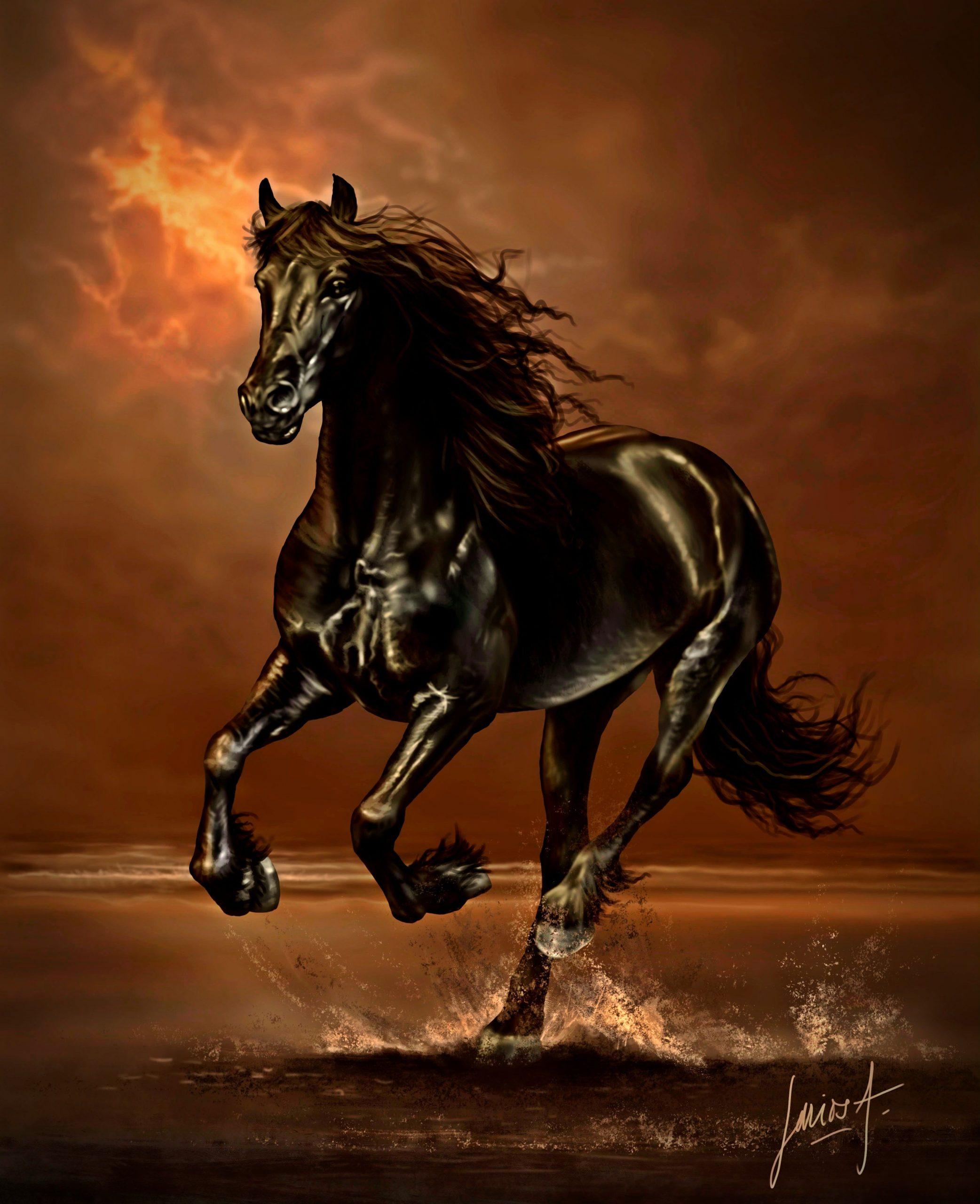 صور حصان 4