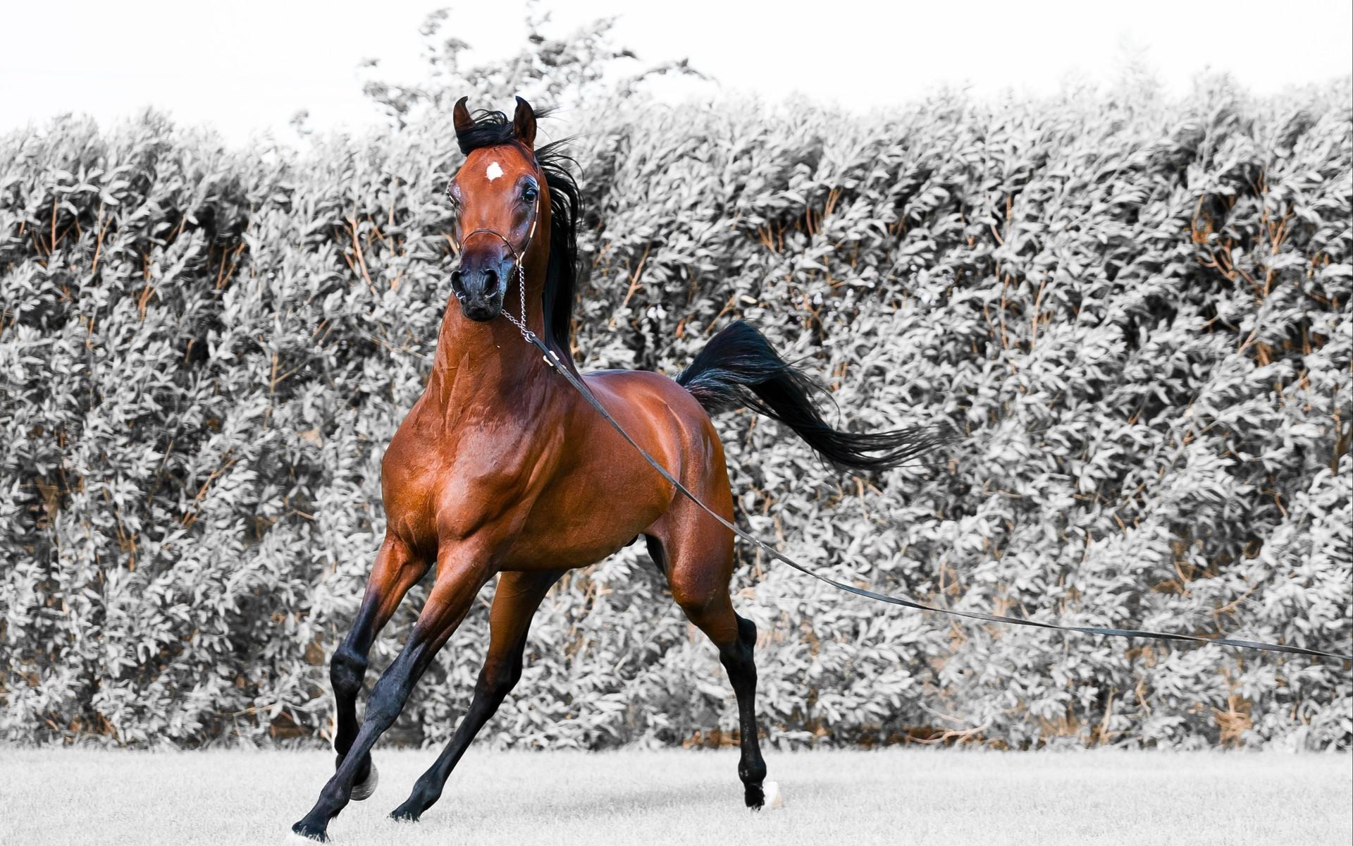 صور حصان 5