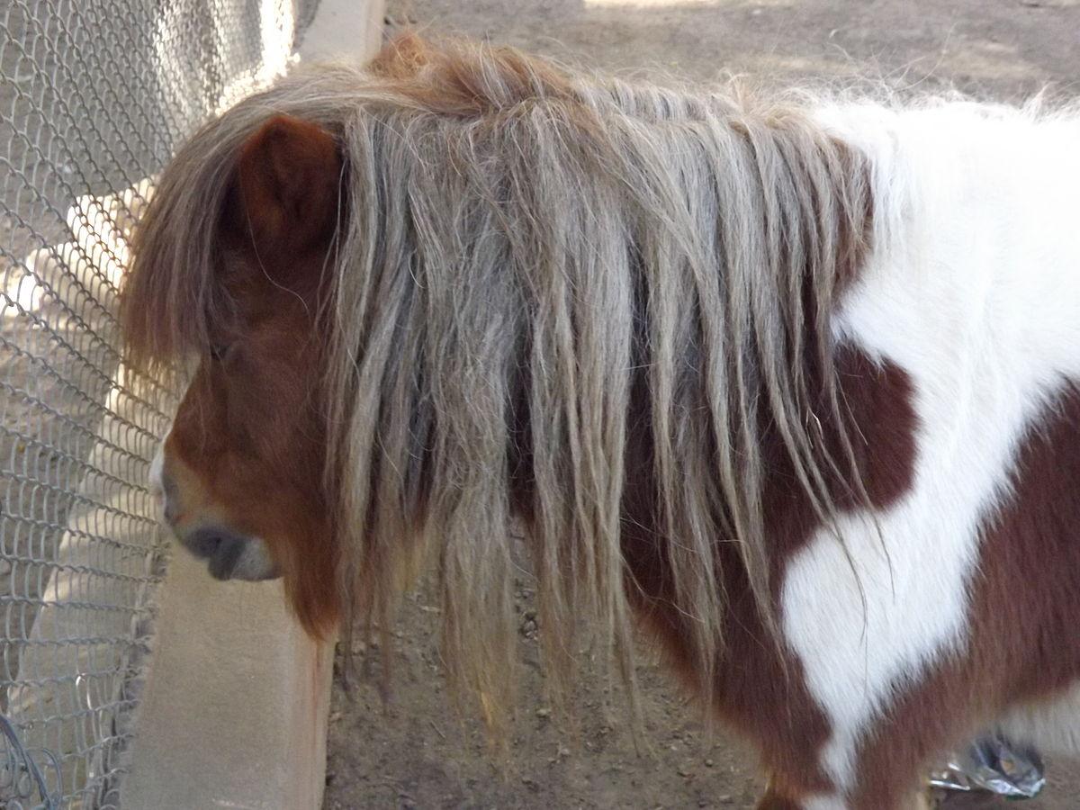 صور حصان 7