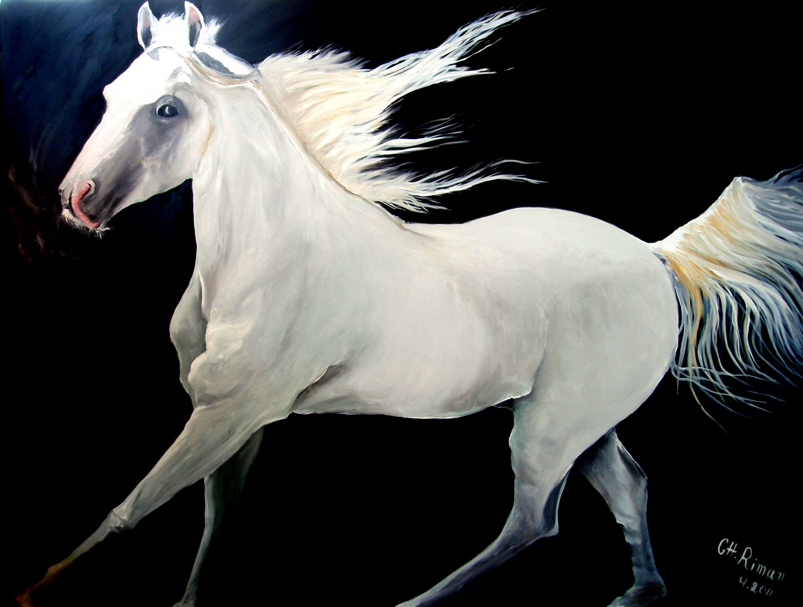 صور حصان 9