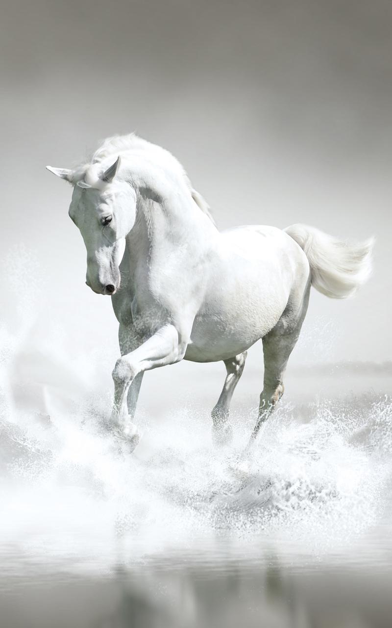 صور خيول 1