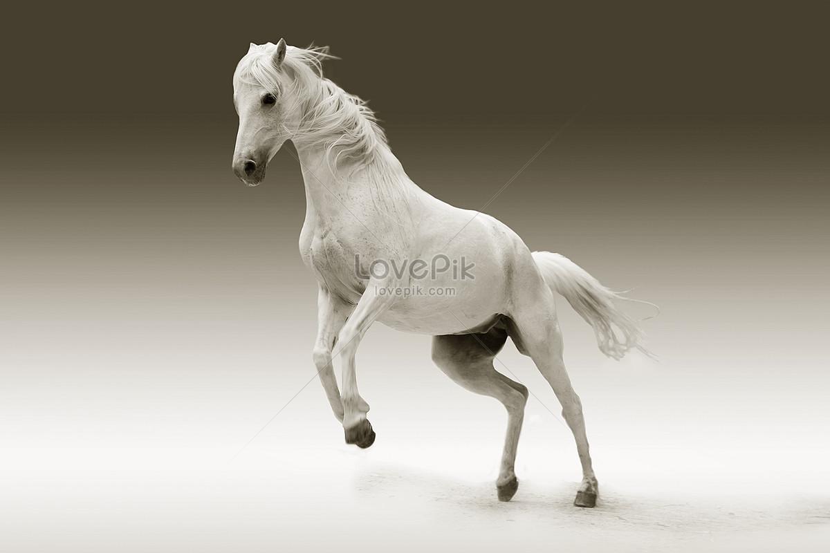 صور خيول 10
