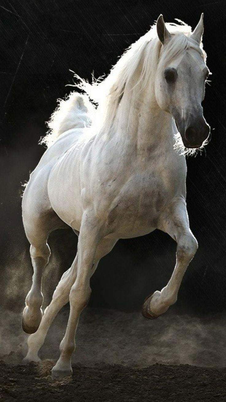 صور خيول 14