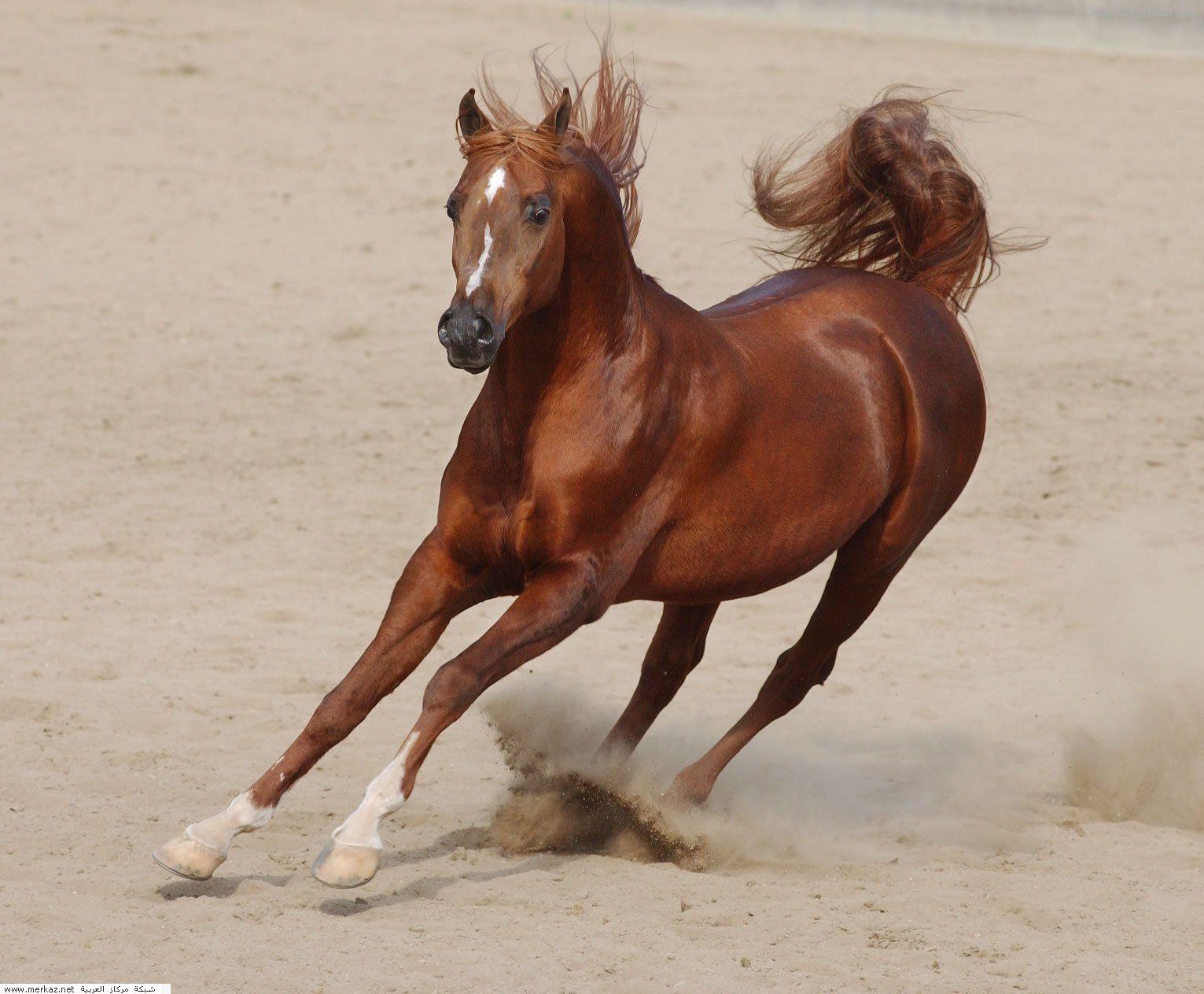 صور خيول 2