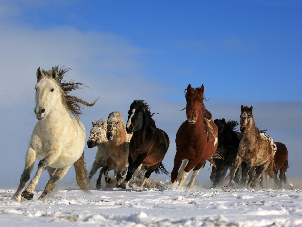صور خيول 3