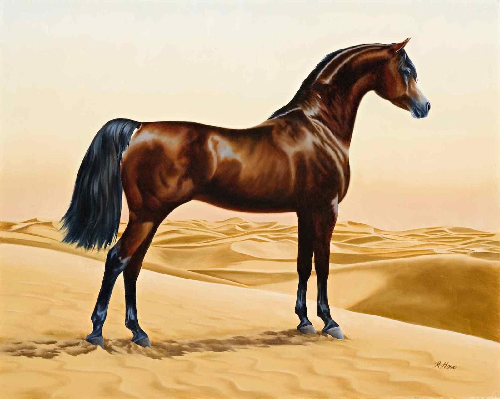 صور خيول 4