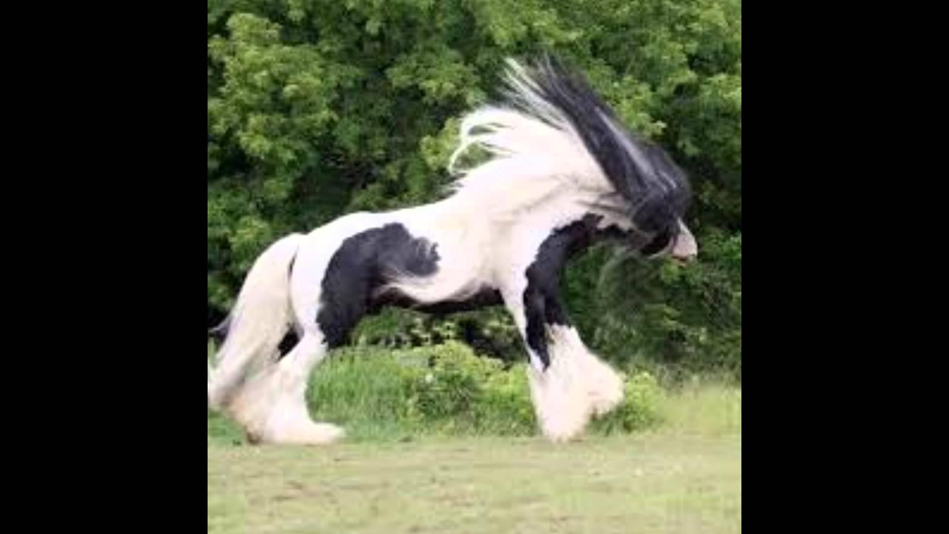 صور خيول 5