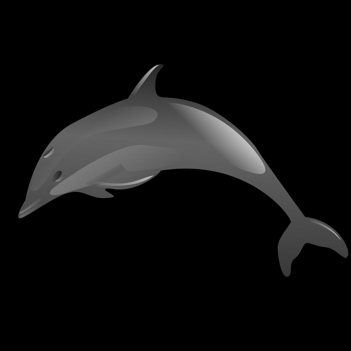 صور دولفين خلفيات دولفين dolphin 1