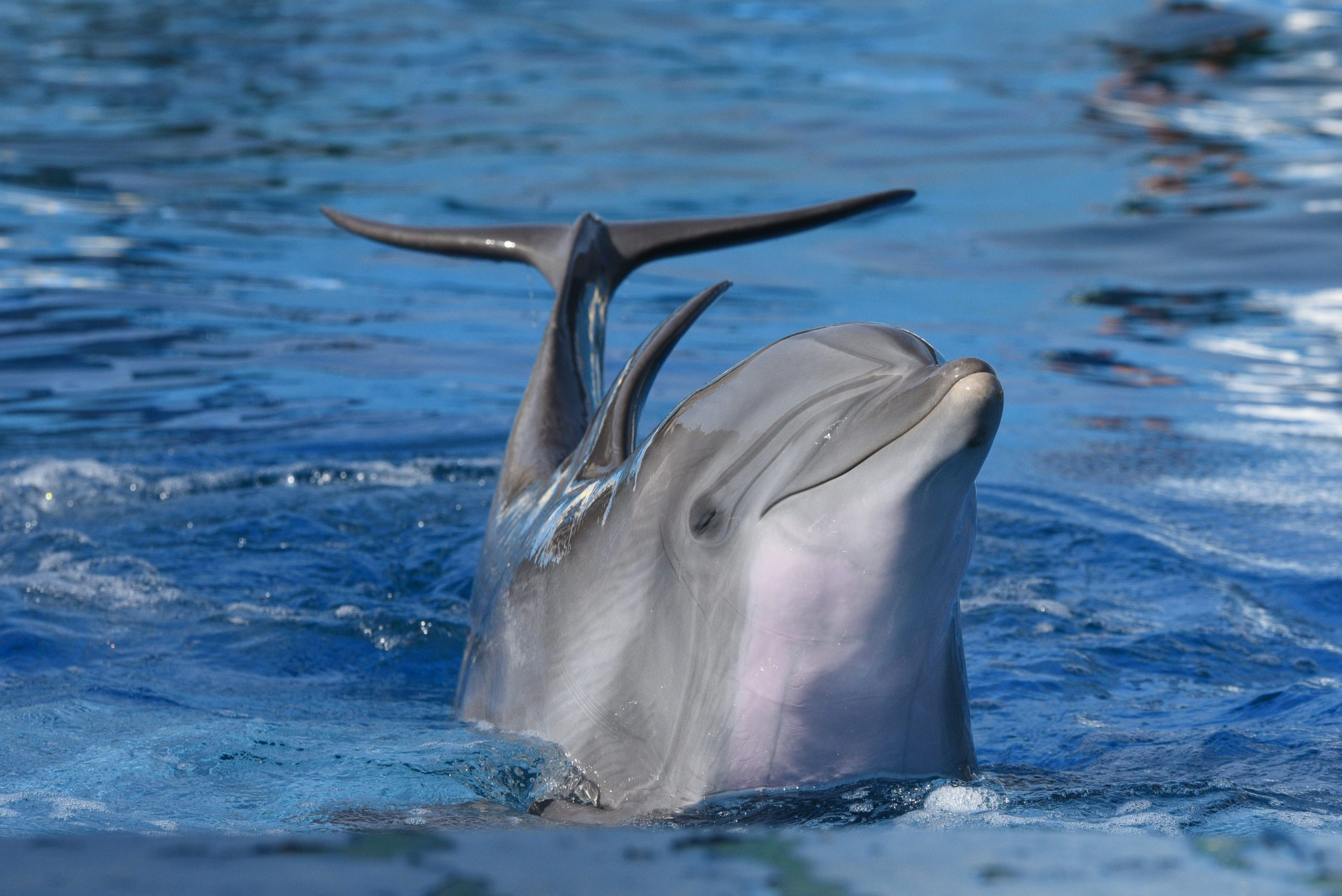 صور دولفين خلفيات دولفين dolphin 103