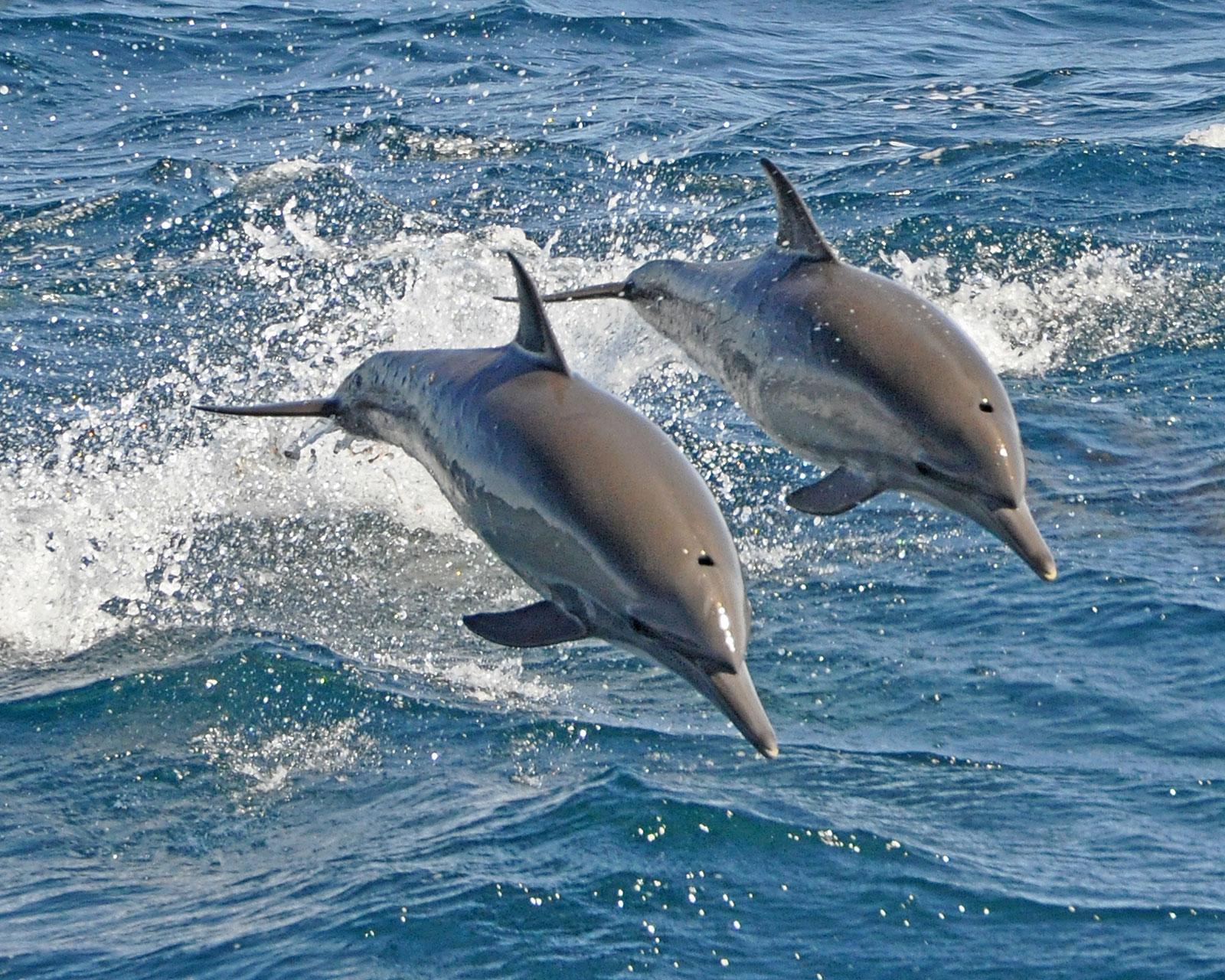 صور دولفين خلفيات دولفين dolphin 118