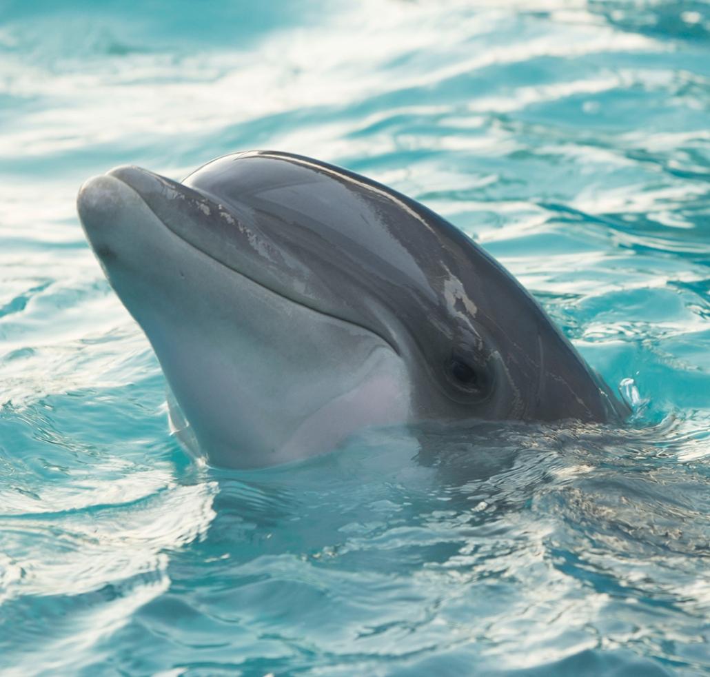 صور دولفين خلفيات دولفين dolphin 119
