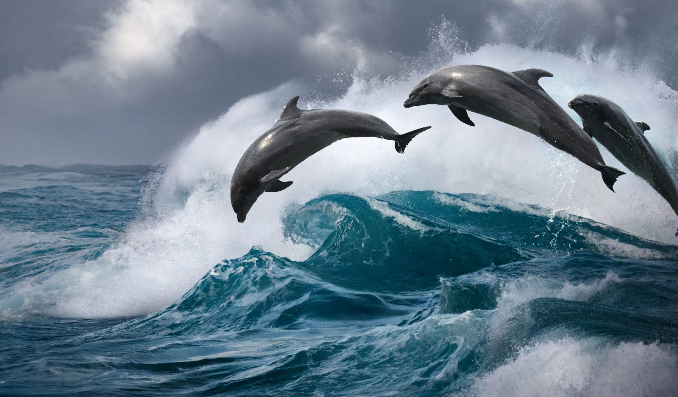 صور دولفين خلفيات دولفين dolphin 120
