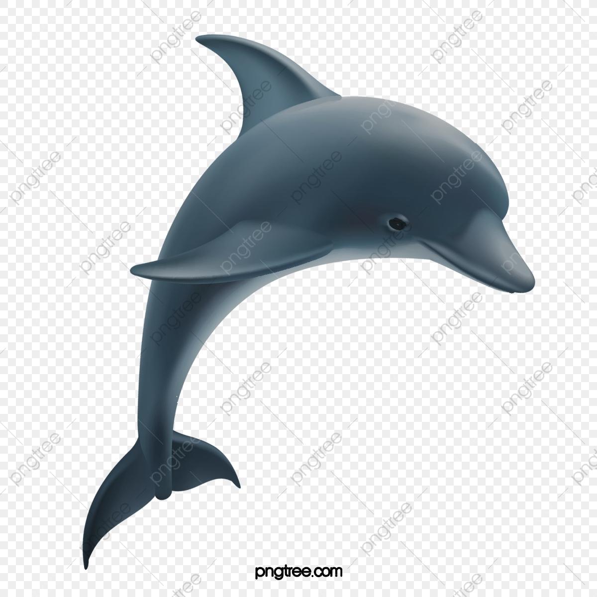 صور دولفين خلفيات دولفين dolphin 17