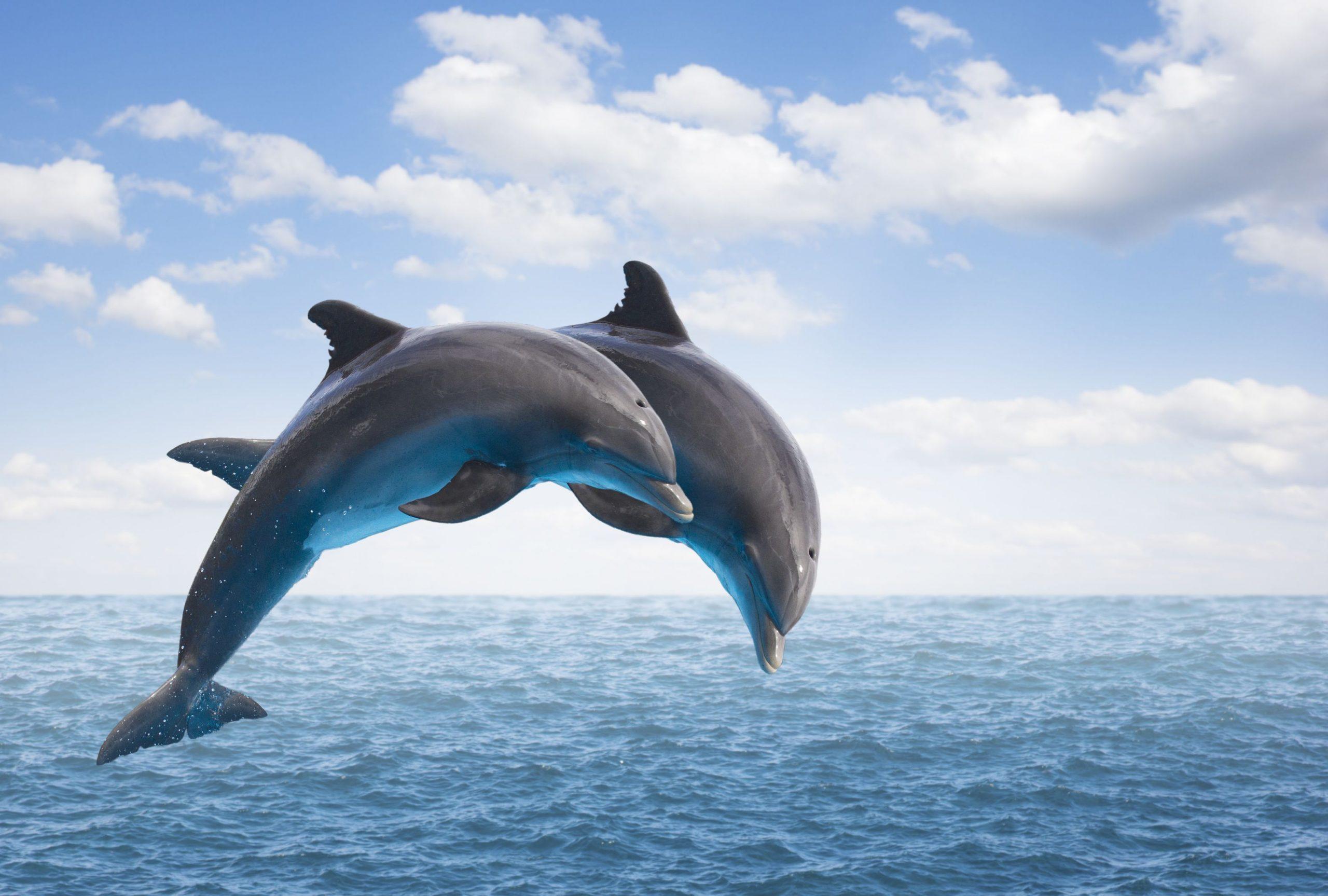 صور دولفين خلفيات دولفين dolphin 2