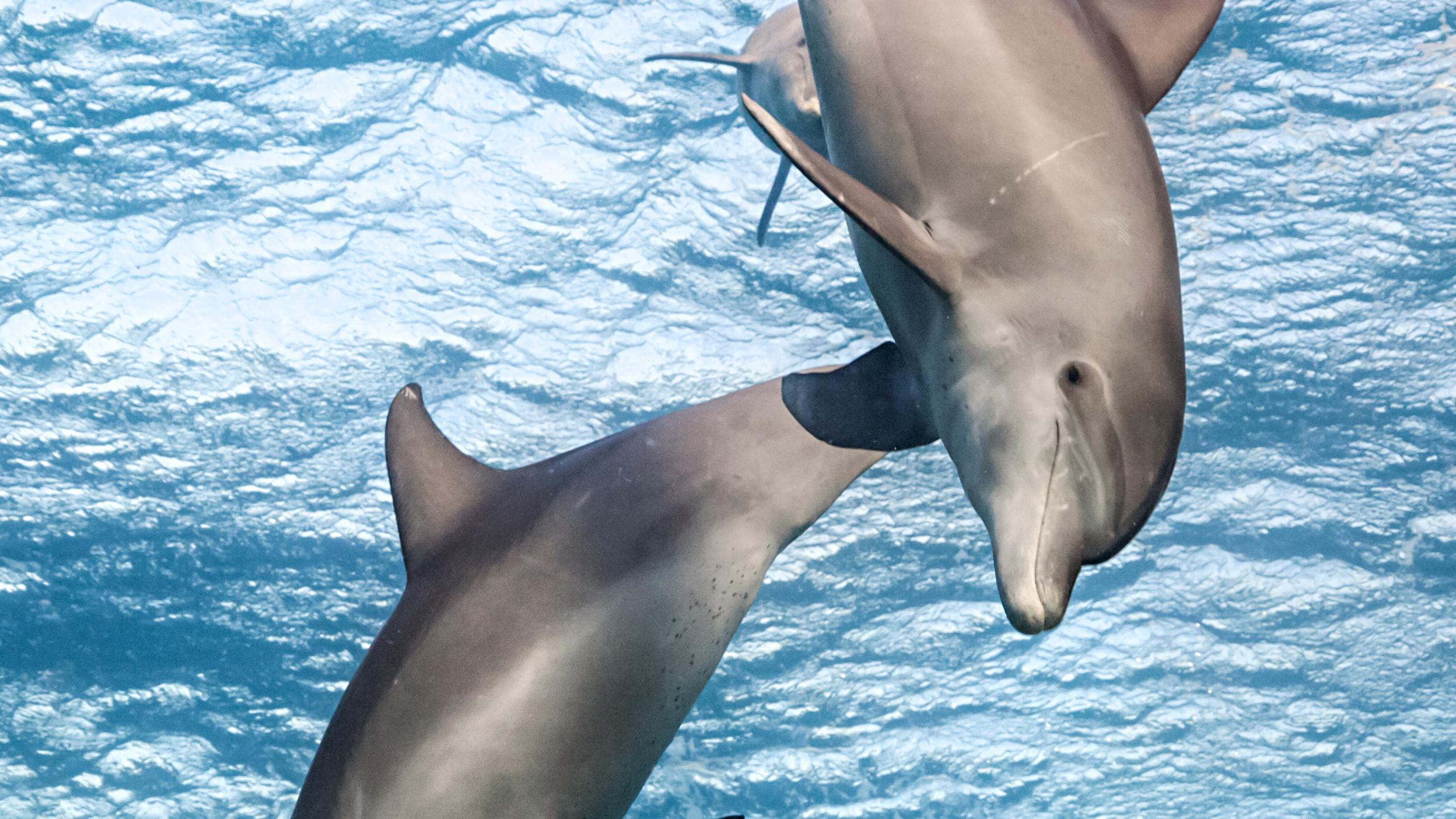 صور دولفين خلفيات دولفين dolphin 6